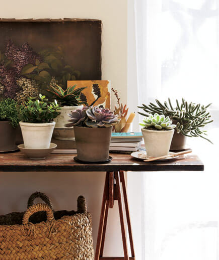 Bring the outdoors in with plants